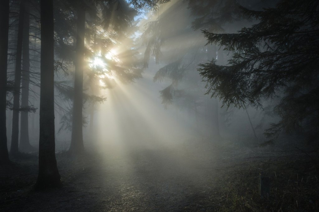Sunlight and shadows in a forest