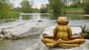 Relaxed frog sitting in meditation
